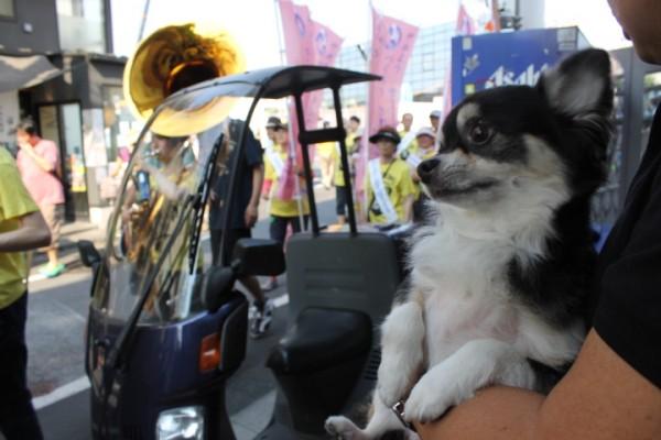 第25回下北沢音楽祭と、こてつ。