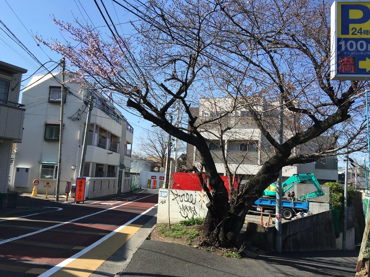 下北沢の桜2016 本日東京都で開花宣言