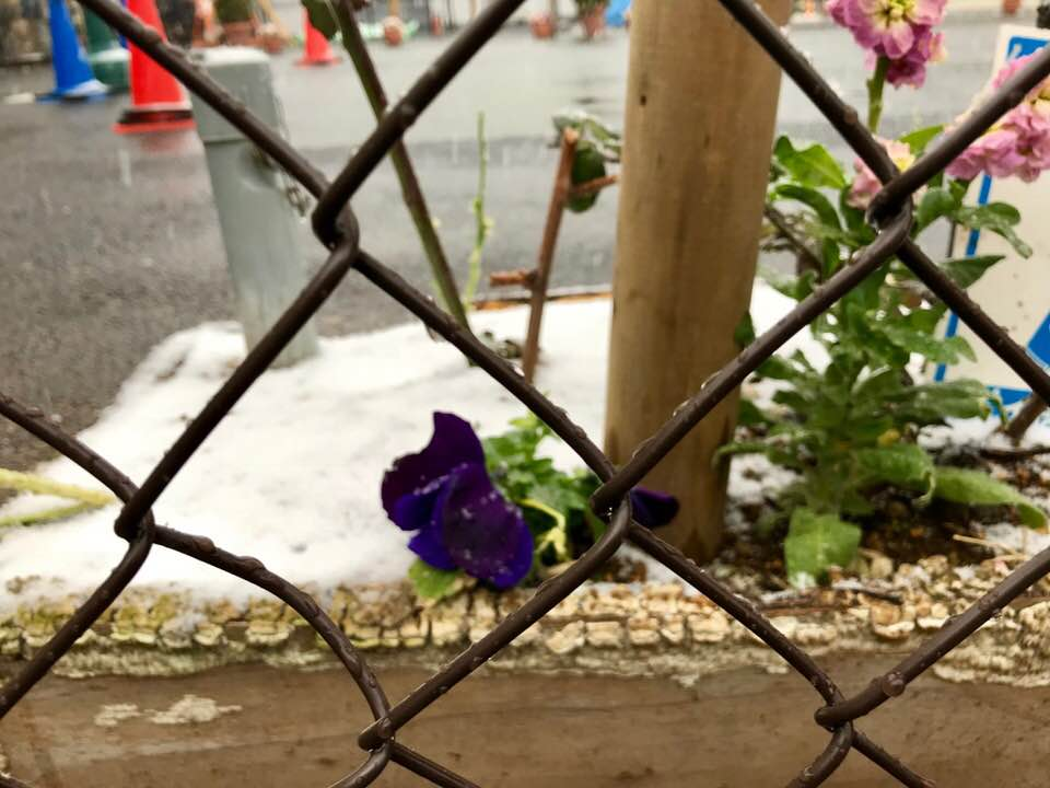 下北沢に今年最初の雪が降る