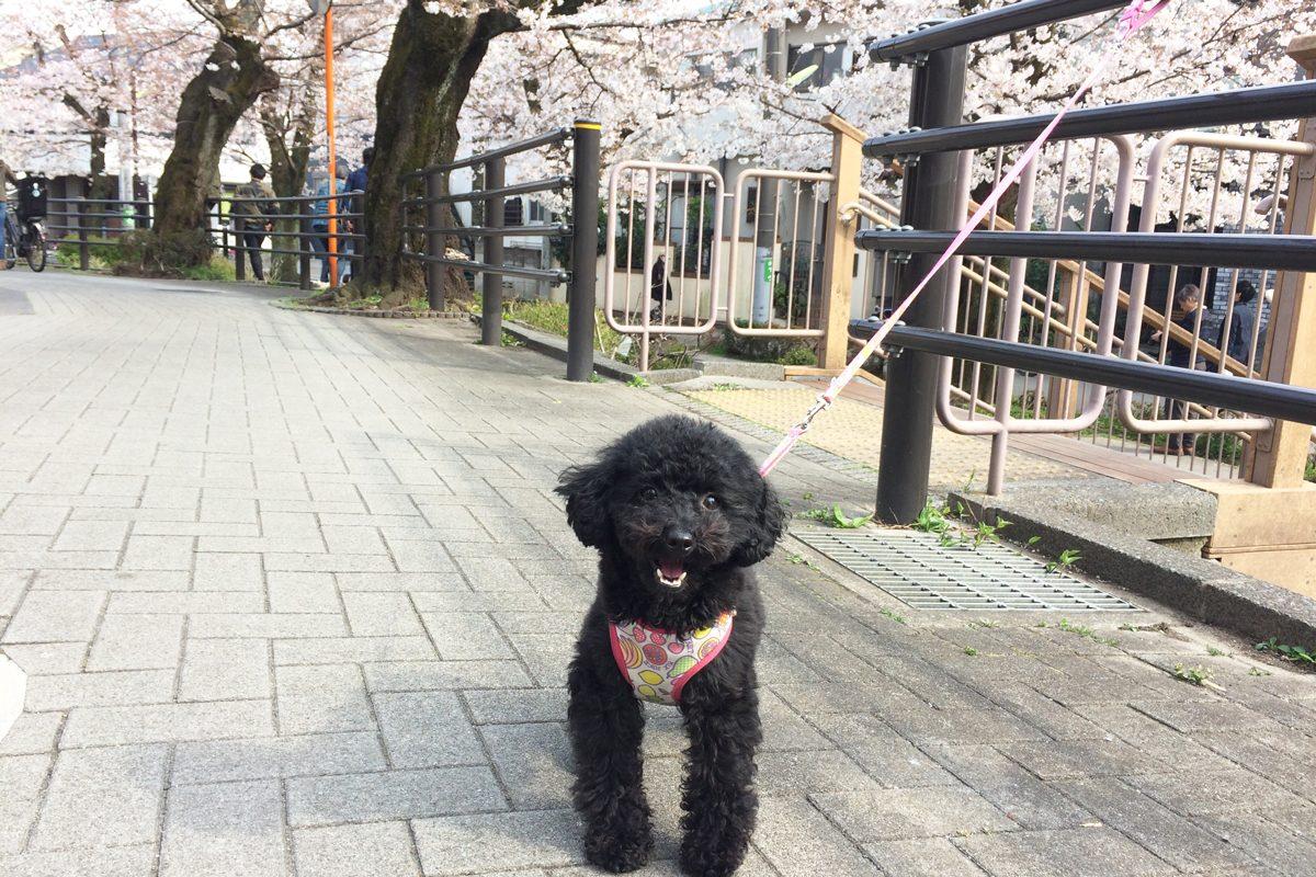 桜とむくちゃん