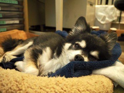 コロナ禍の影響は露知らず、犬たちは今日ものんびり過ごす。