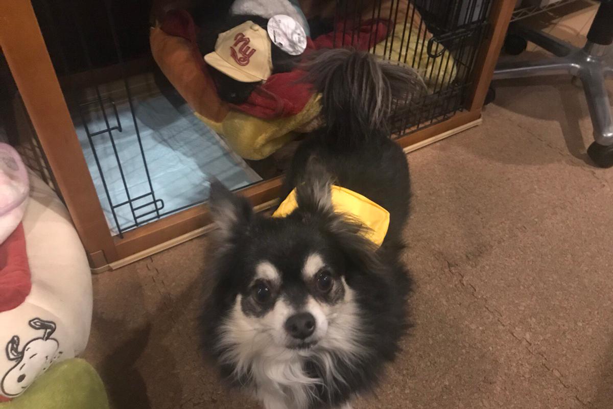 3coinsで犬用グッズを買ってみました!