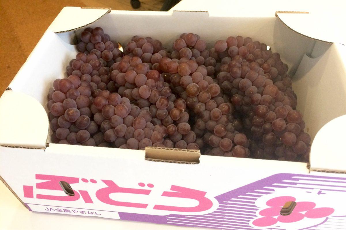 今度は葡萄をいただきました