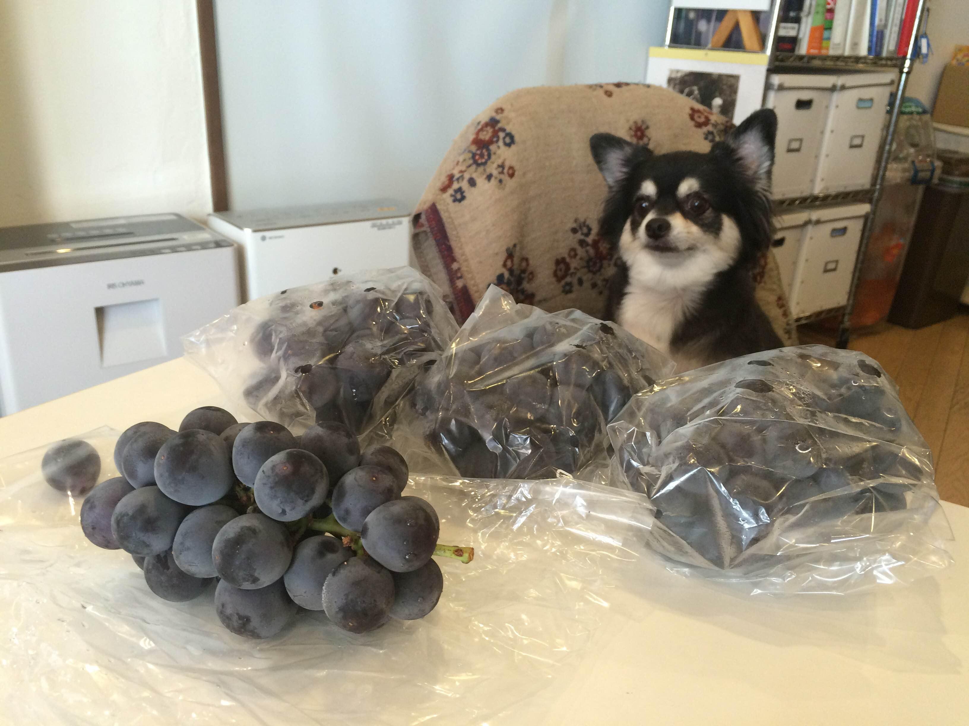 葡萄売りのこてつおじさん