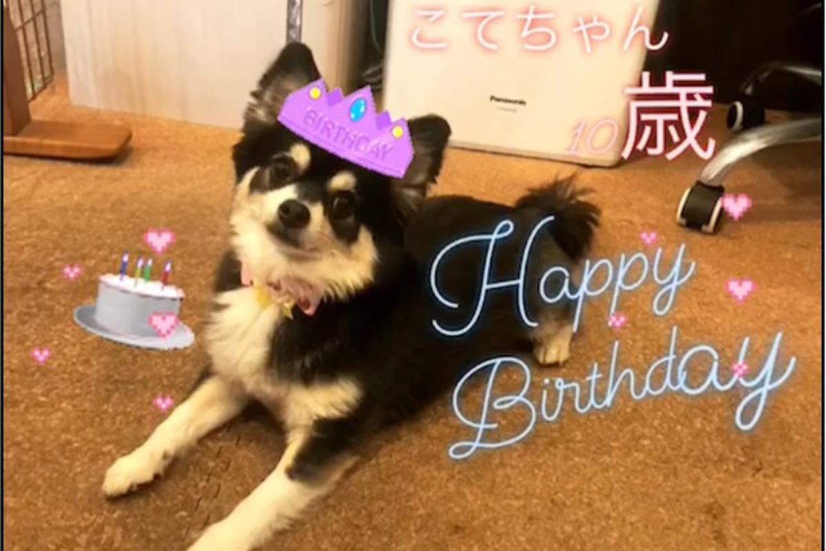 こてちゃん10歳の誕生日☆20180507