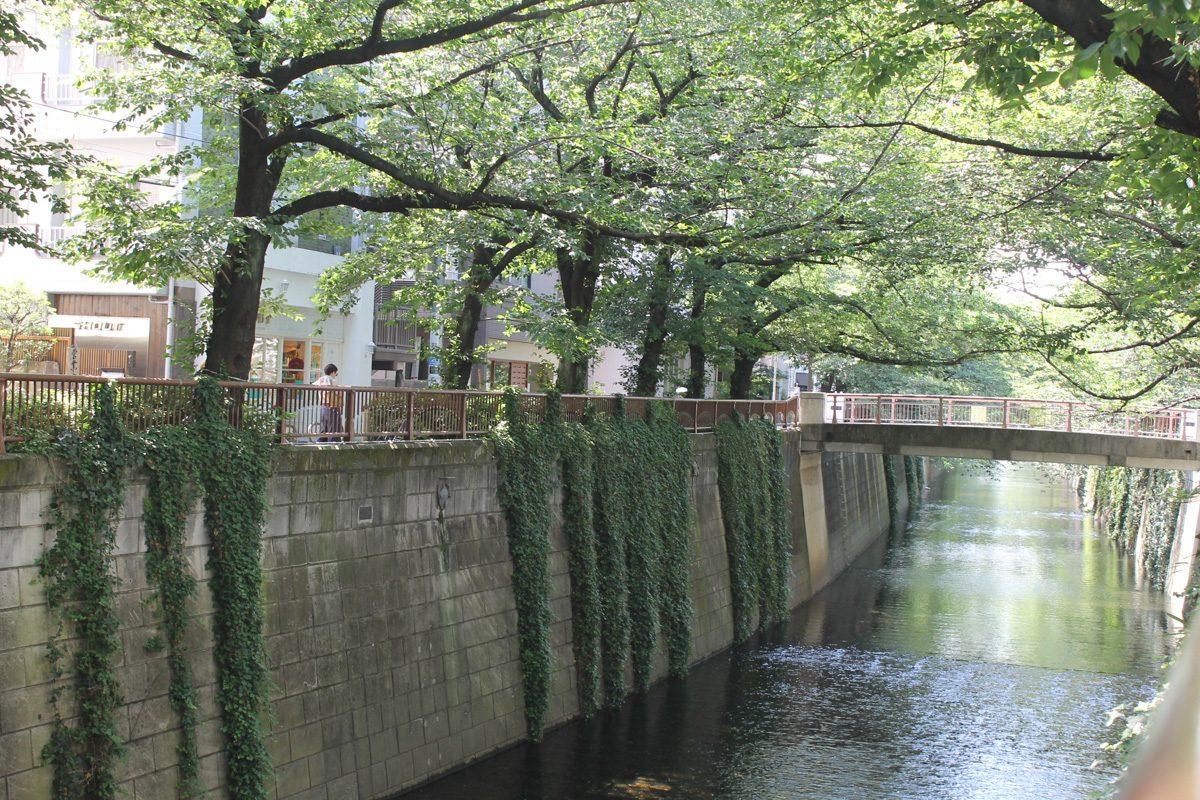 桜の季節だけじゃない、初夏の目黒川さんぽ(中目黒〜パレットM青葉台)