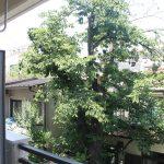 お部屋からの眺望。物件前に桜の木があります。
