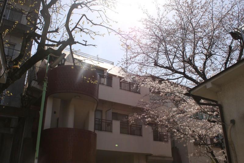 駅近・角部屋・ペット飼育可!桜が目の前に広がる格安賃貸マンション「アネックス阿川」